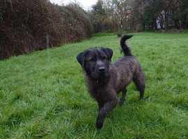 Colegate Rescue dog