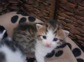 Kittens x3 left