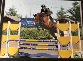 Free lance Riding/Teachinng