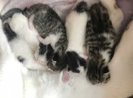 Kittens for reserve