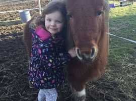 Mini shetland leadrein/drive pony