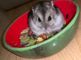 Mini Hamster Rescue