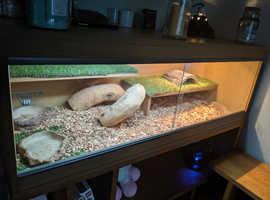 Vivarium plus set up