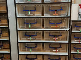 Reptile racks available