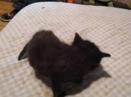 4 Lovely cute kitten's for sale