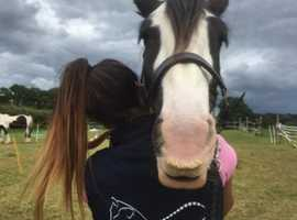 Equine Chiropractor and massage therapy
