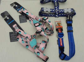 New Harnesses and Dog Collar