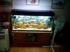 4 foot aquarium tank
