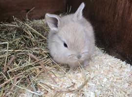 Baby bunnies- 2 LEFT
