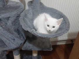 Brand new cat and kitten tree house available