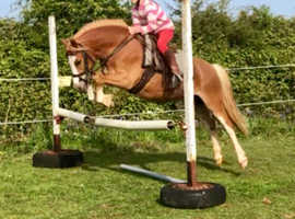 For sale potential top class lr/fr worker pony