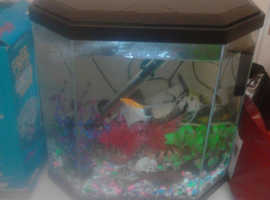 Tropical fish & tank inc