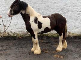 GD Equestrian