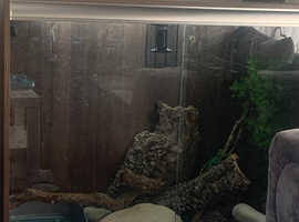 Chinese water dragon and full set up