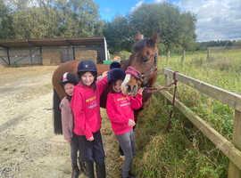 Brood mare/ companion project