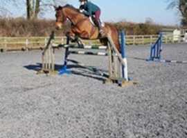 Fortnightly Showjumping and Dressage clinics