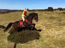 WANTED LOAN! 15.2+ HORSE