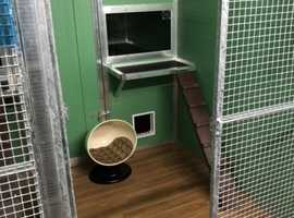New Cattery in Neath Port Talbot close to M4