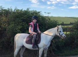 12.2hh Welsh pony for PART loan cornwall