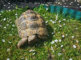 Tortoise and housing