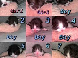 9 beautiful baby  kittens.