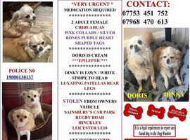 Missing chihuahuas stolen from LE10 on 14/03/19