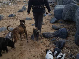 Panting Paws dog walking service