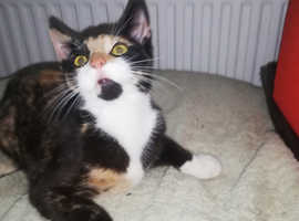 kittens for sale to loving homes
