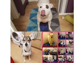24hr emergency groomers We come to you Special discounts for rescue dogs