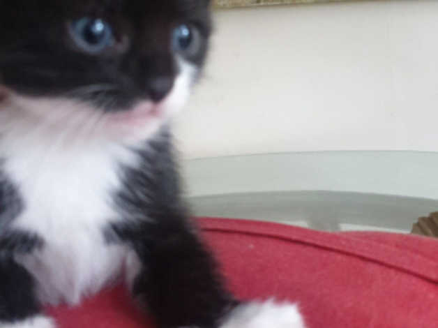 Kittens For Sale In Glasgow G46 On Freeads Classifieds Mixed Breed Classifieds