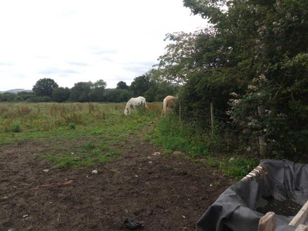 land wanted for a caravan or static caravan in hampshire area in hampshire, hampshire freeads