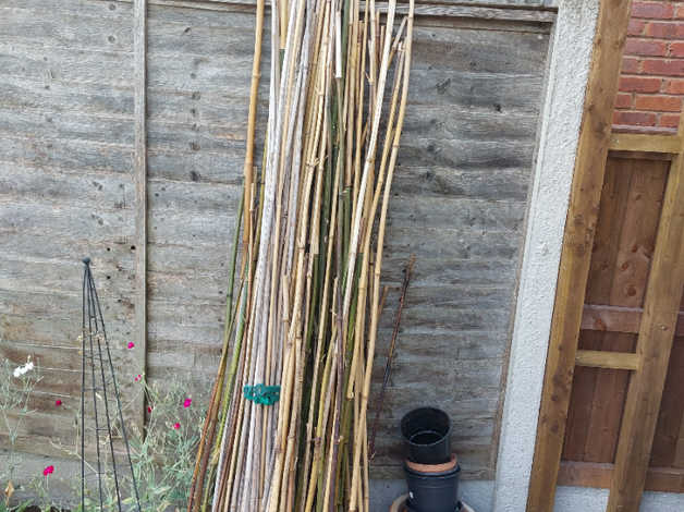 Bamboo canes in Crewe