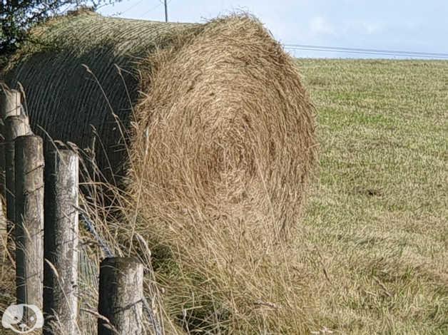Hay Bales in Stroud