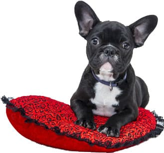 Pets For Sale In The Uk Buy Pets Online Freeads